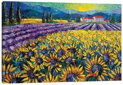 Sunflowers And Lavender Field - The Colors Of Provence Canvas Art Print
