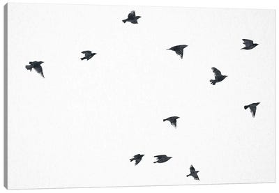 The Ravens Flying Canvas Art Print