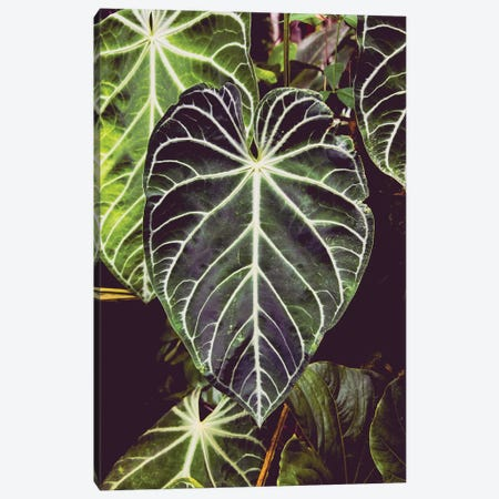 Green Jungle Leaf Adventure 3-Piece Canvas #MGK299} by Nature Magick Canvas Art Print