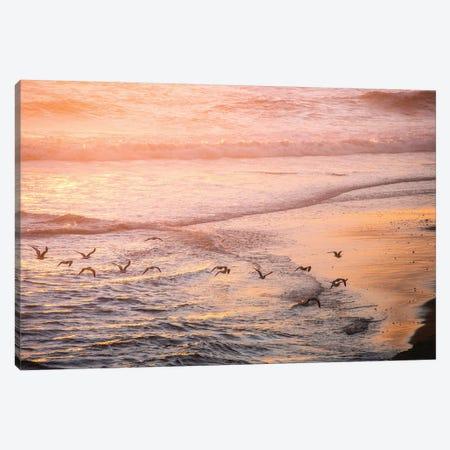 Ocean Beach and Sunset Seagulls Canvas Print #MGK399} by Nature Magick Canvas Wall Art