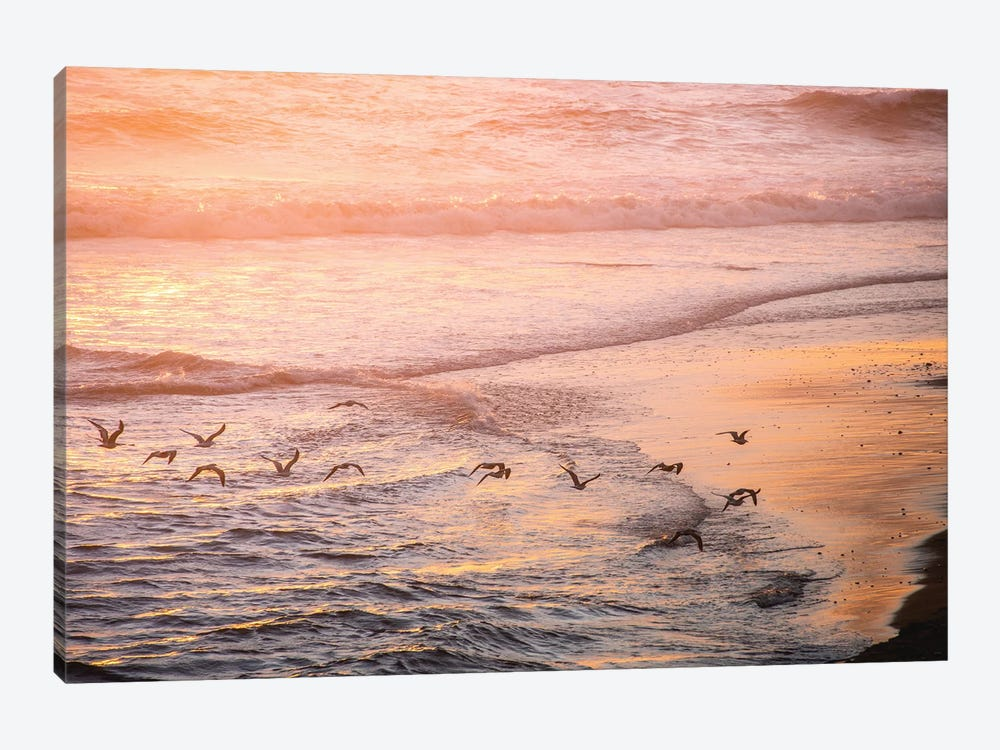 Ocean Beach And Sunset Seagulls Canvas Art Print By Nature Magick Icanvas