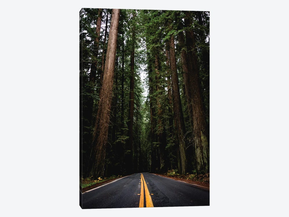 Forest Road, Redwood National Park, California by Nature Magick 1-piece Canvas Print
