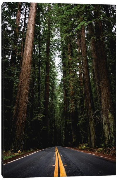 Forest Road, Redwood National Park, California Canvas Art Print