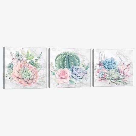 Desert Succulents Triptych Canvas Print Set #MGK3HSET001} by Nature Magick Canvas Wall Art