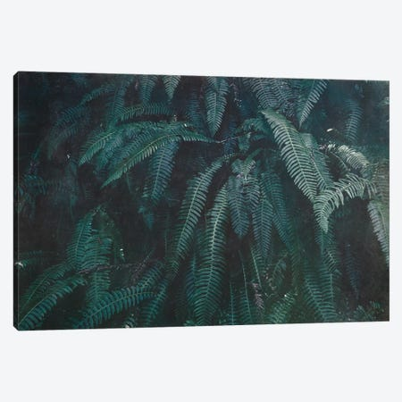 Pacific Northwest Fern Forest Vintage Green Canvas Print #MGK405} by Nature Magick Canvas Print