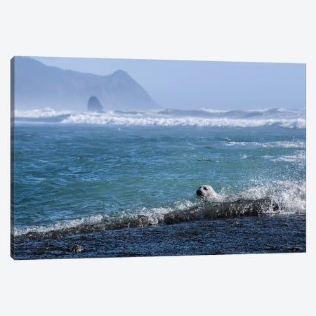 Pacific Ocean Harbor Seal Canvas Print #MGK406} by Nature Magick Canvas Art Print