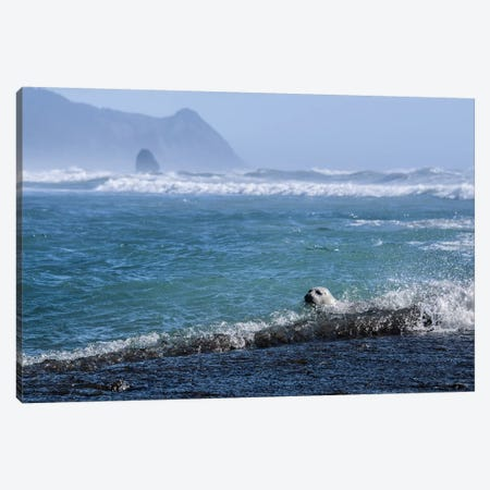 Pacific Ocean Harbor Seal 3-Piece Canvas #MGK406} by Nature Magick Canvas Art Print