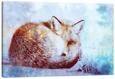 Red Fox Winter Turquoise Forest Animal Portrait Canvas Art Print