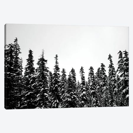 Snow Covered Forest Treescape II Canvas Print #MGK434} by Nature Magick Canvas Art