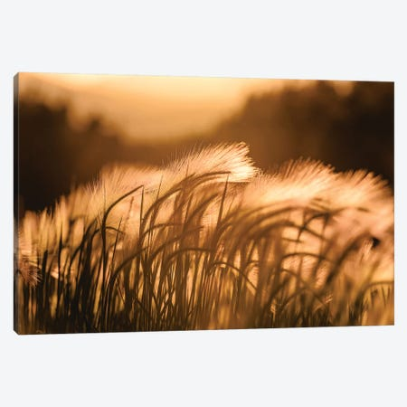 Summer Sunset Vintage Field Adventure Canvas Print #MGK451} by Nature Magick Canvas Print