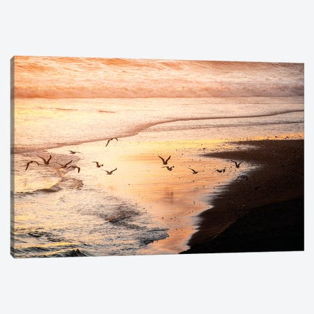 Sunset Seagulls and Pacific Ocean II Canvas Print #MGK453} by Nature Magick Canvas Print