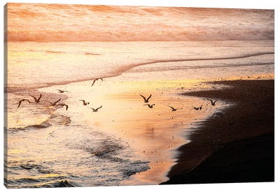 Sunset Seagulls and Pacific Ocean II Canvas Art Print