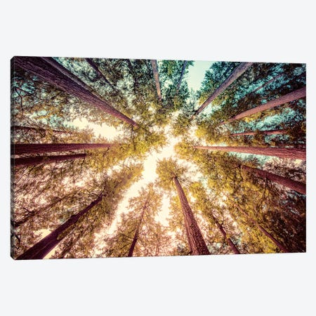 Vintage Forest Canopy Sky Canvas Print #MGK476} by Nature Magick Canvas Wall Art