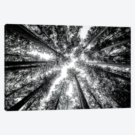 Vintage Forest Canopy Sky Black and White Canvas Print #MGK477} by Nature Magick Canvas Wall Art