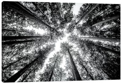 Vintage Forest Canopy Sky Black and White Canvas Art Print