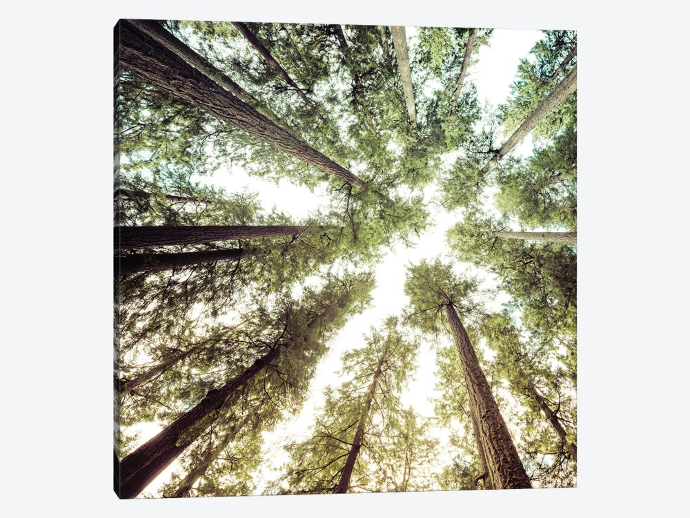 Forest Tree Sky by Nature Magick 1-piece Art Print