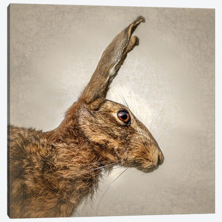 Hare Canvas Print #MGM11} by Mark Gemmell Canvas Art Print