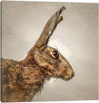 Hare Canvas Art Print