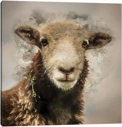 Herdwick Canvas Art Print