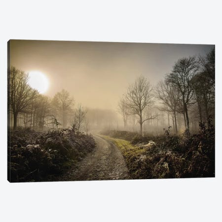 Misty Morning Canvas Print #MGM17} by Mark Gemmell Canvas Wall Art