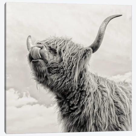 Spring Air I Canvas Print #MGM20} by Mark Gemmell Canvas Art
