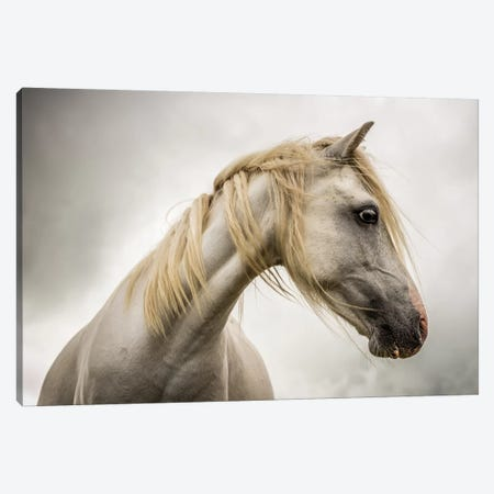White Horse Canvas Print #MGM25} by Mark Gemmell Canvas Print