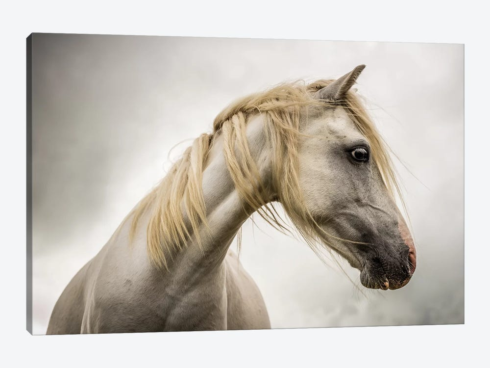 White Horse by Mark Gemmell 1-piece Canvas Art Print