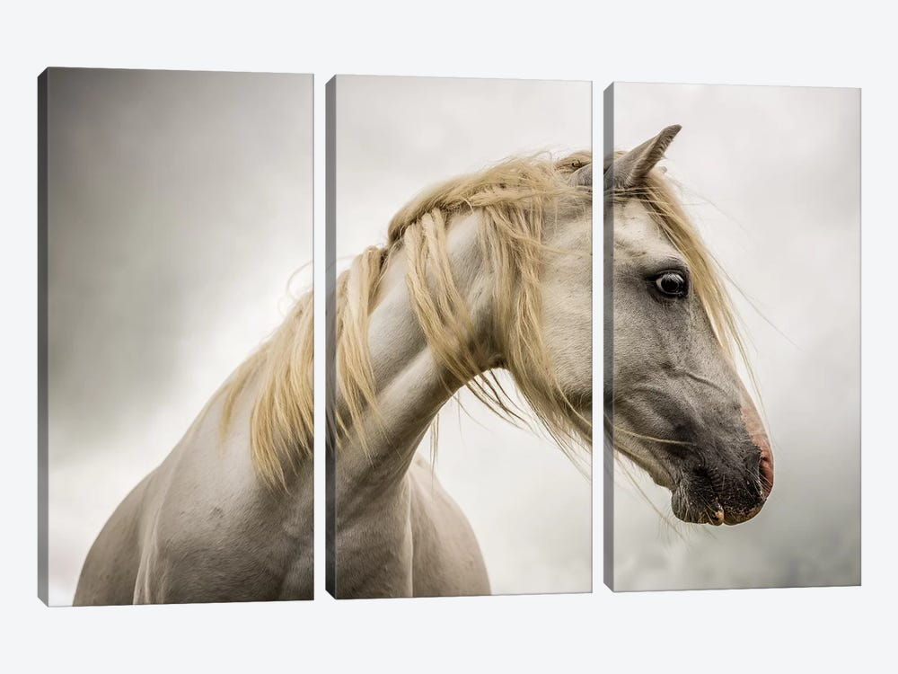 White Horse by Mark Gemmell 3-piece Art Print