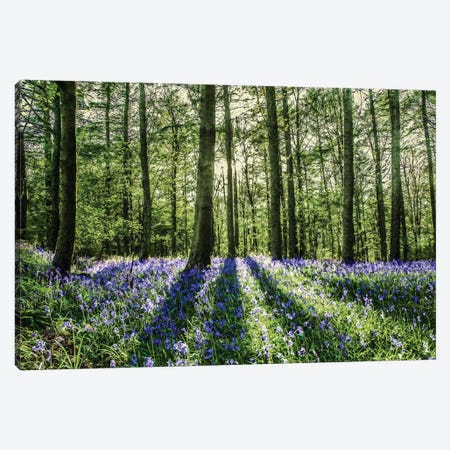 Bluebell Wood Canvas Print #MGM28} by Mark Gemmell Canvas Art
