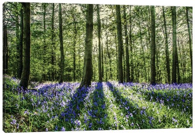 Bluebell Wood Canvas Art Print