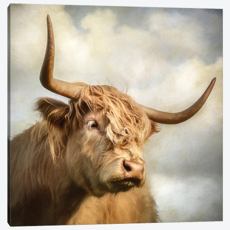 Cow Canvas Print #MGM4} by Mark Gemmell Art Print