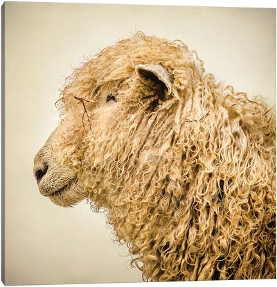 Curly I Canvas Art Print