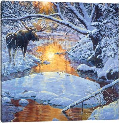 Moose XXIX Canvas Art Print