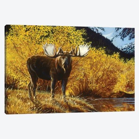 Moose IV Canvas Print #MGU15} by Jan Martin Mcguire Canvas Artwork