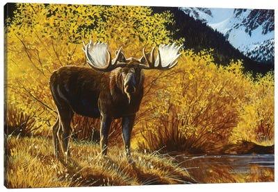 Moose IV Canvas Art Print