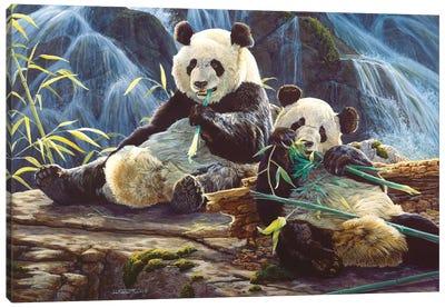 Panda III Canvas Art Print