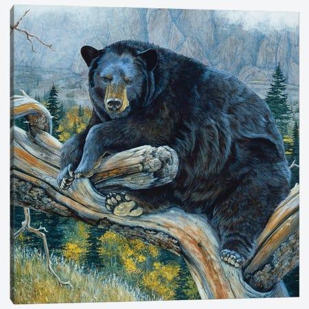 Black Bear XXIII Canvas Print #MGU1} by Jan Martin Mcguire Art Print