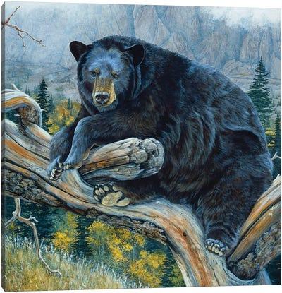 Black Bear XXIII Canvas Art Print