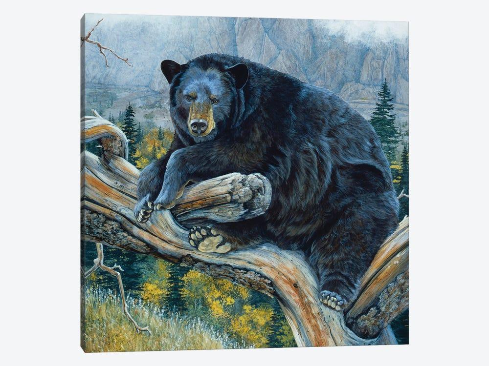 Black Bear XXIII by Jan Martin Mcguire 1-piece Canvas Art Print