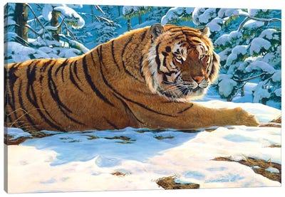Tiger Snow Canvas Art Print