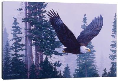 Eagle III Canvas Art Print