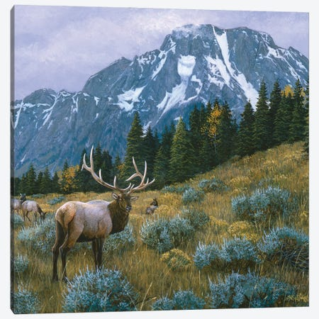 Elk XIV Canvas Print #MGU6} by Jan Martin Mcguire Canvas Art