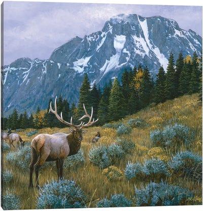 Elk XIV Canvas Art Print