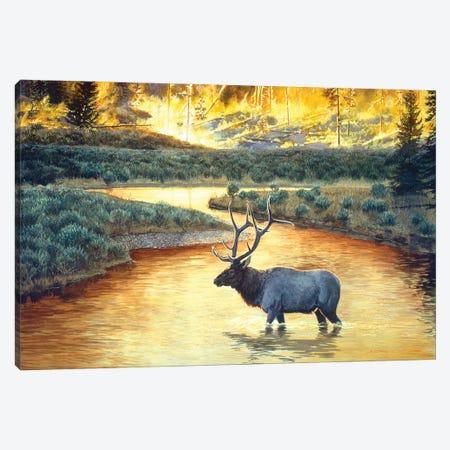 Elk VIII Canvas Print #MGU7} by Jan Martin Mcguire Canvas Wall Art