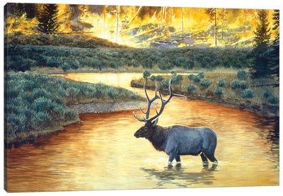 Elk VIII Canvas Art Print