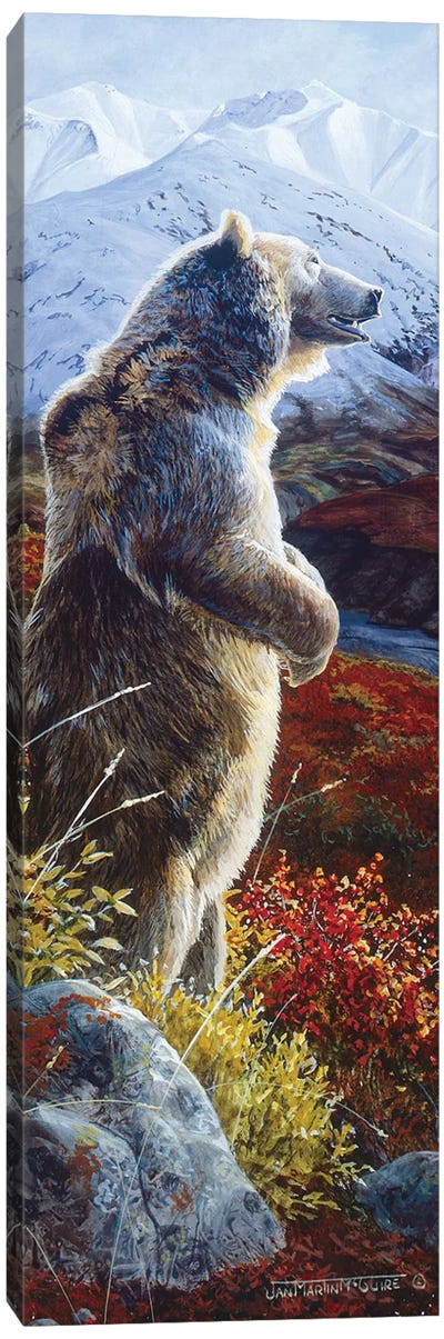 Grizzly VIII Canvas Art Print