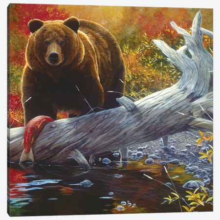 Grizzly IX Canvas Print #MGU9} by Jan Martin Mcguire Art Print