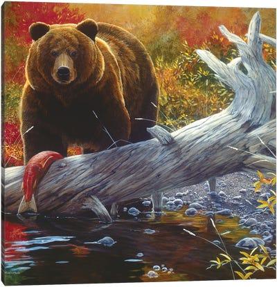 Grizzly IX Canvas Art Print