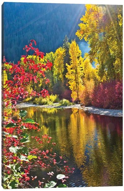 Autumn foliage, Nason Creek Area, Wenatchee National Forest, Washington State, USA Canvas Art Print