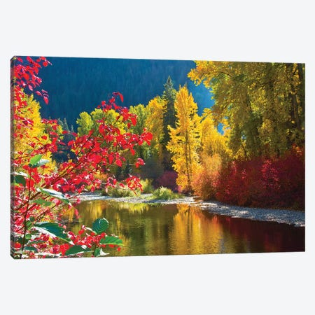Autumn foliage, Nason Creek Area, Wenatchee National Forest, Washington State, USA Canvas Print #MHE11} by Michel Hersen Art Print